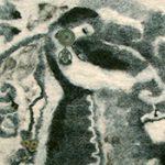 Валяние из шерсти фото галерея