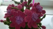 cvety-kryuchkom-foto-08