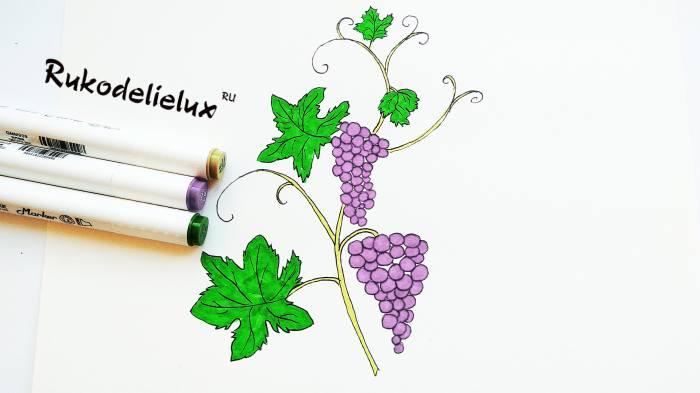 разукрашивание винограда фломастерами или маркерами
