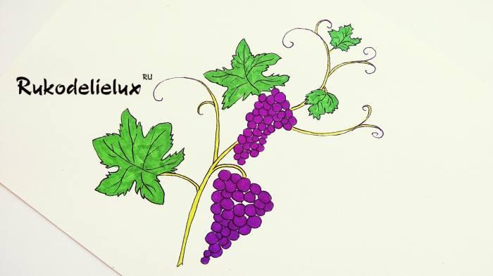 готовый рисунок винограда фломастерами и карандашом