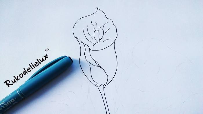 прожилки и стебелек калла цветок